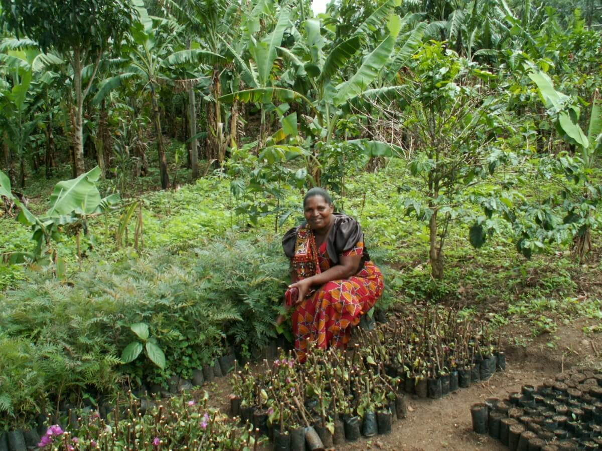 how to tackle poverty by planting trees