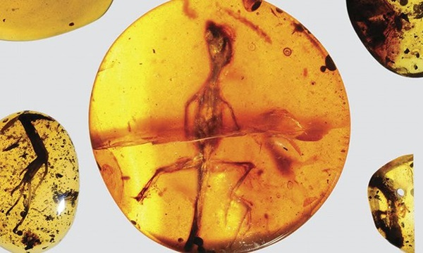 Ancient lizard preserved