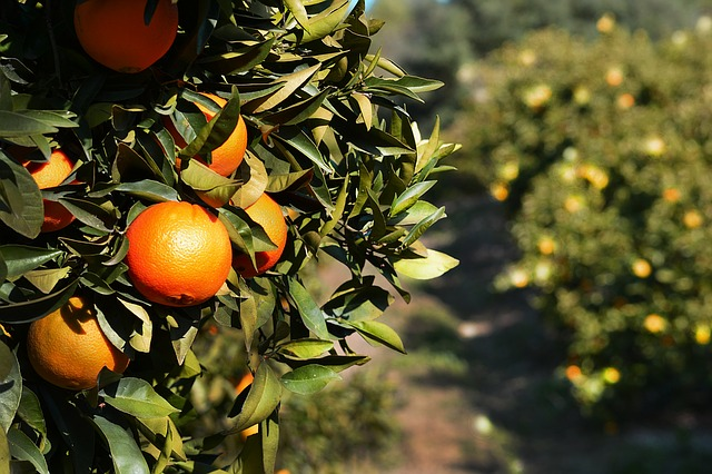 5 Bible verses emphasising the need for us to bear fruit