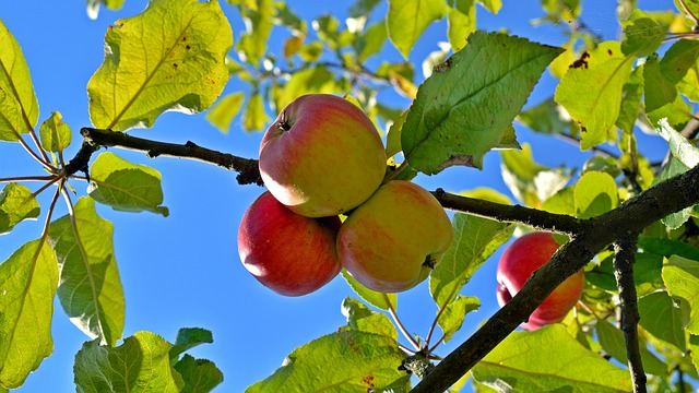 Three things you should know to be able to live a fruitful