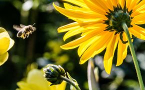 Hundreds sign up to save Britain's bees after being inspired by Church of England school children