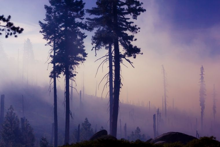 Environment devastated by fire