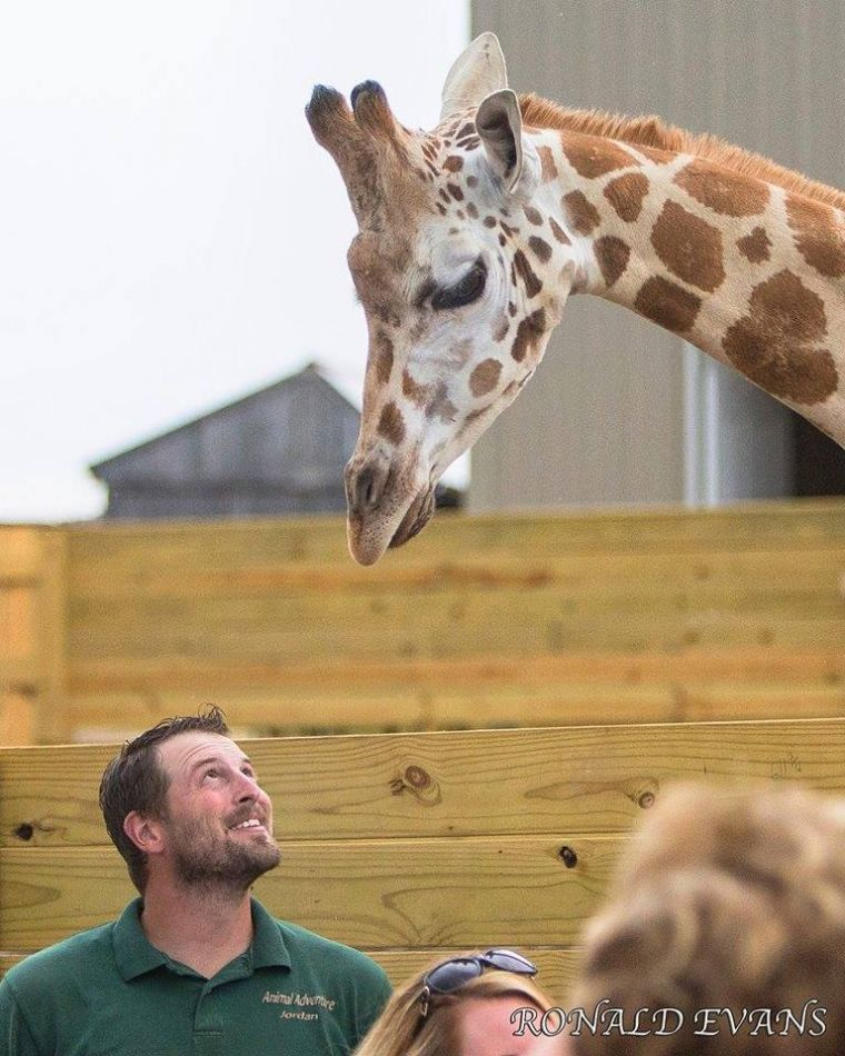 harpursville muslim April the giraffe's calf coming 'today, tonight' – watch live posted  harpursville, ny — zookeepers  landlord recorded denying.