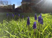 spring-flowers-in-the-sunlight