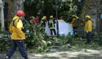 firefighters-cover-victims-of-a-tree-that-toppled-into-worshipping-crowds-during-a-religious-festival-in-funchal-portugal