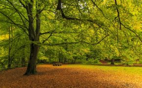 'Oaks of righteousness': The hidden lesson in a Bible prophecy