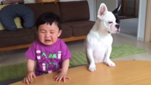 Dog cries with the baby after eating its food