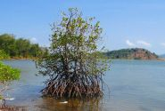 Mangrove theology: Get stuck in and put down deep roots