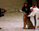 Pope Francis is taking 2,000 poor people to the circus – and animal rights activists object
