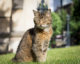 Cathedral cat immortalised in stone